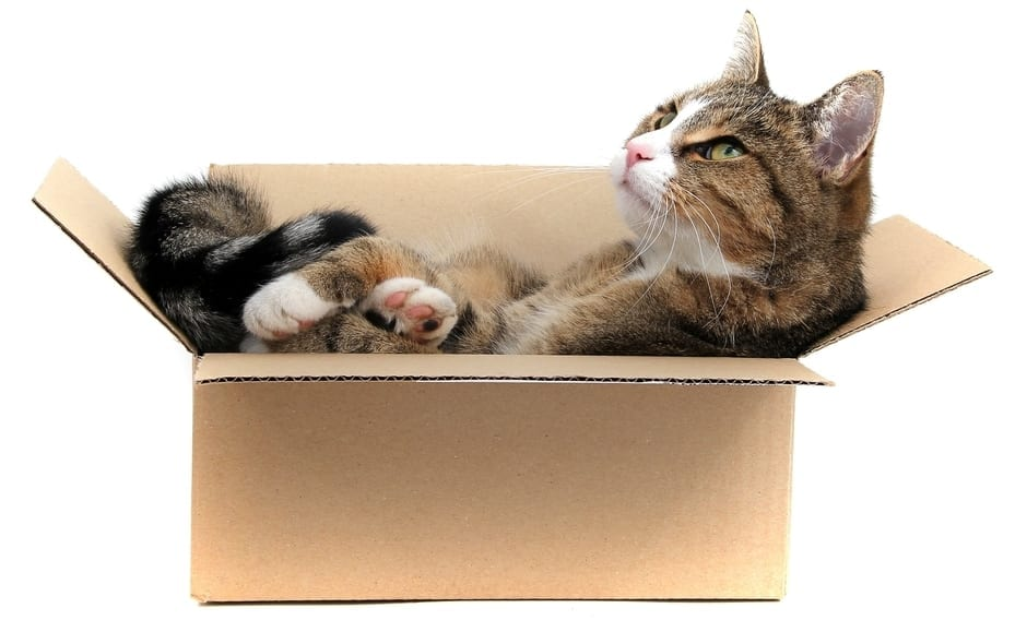 moving_with_cat_tips